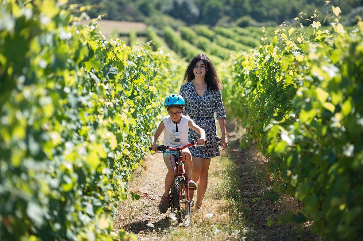 route-des-vins-en-anjou