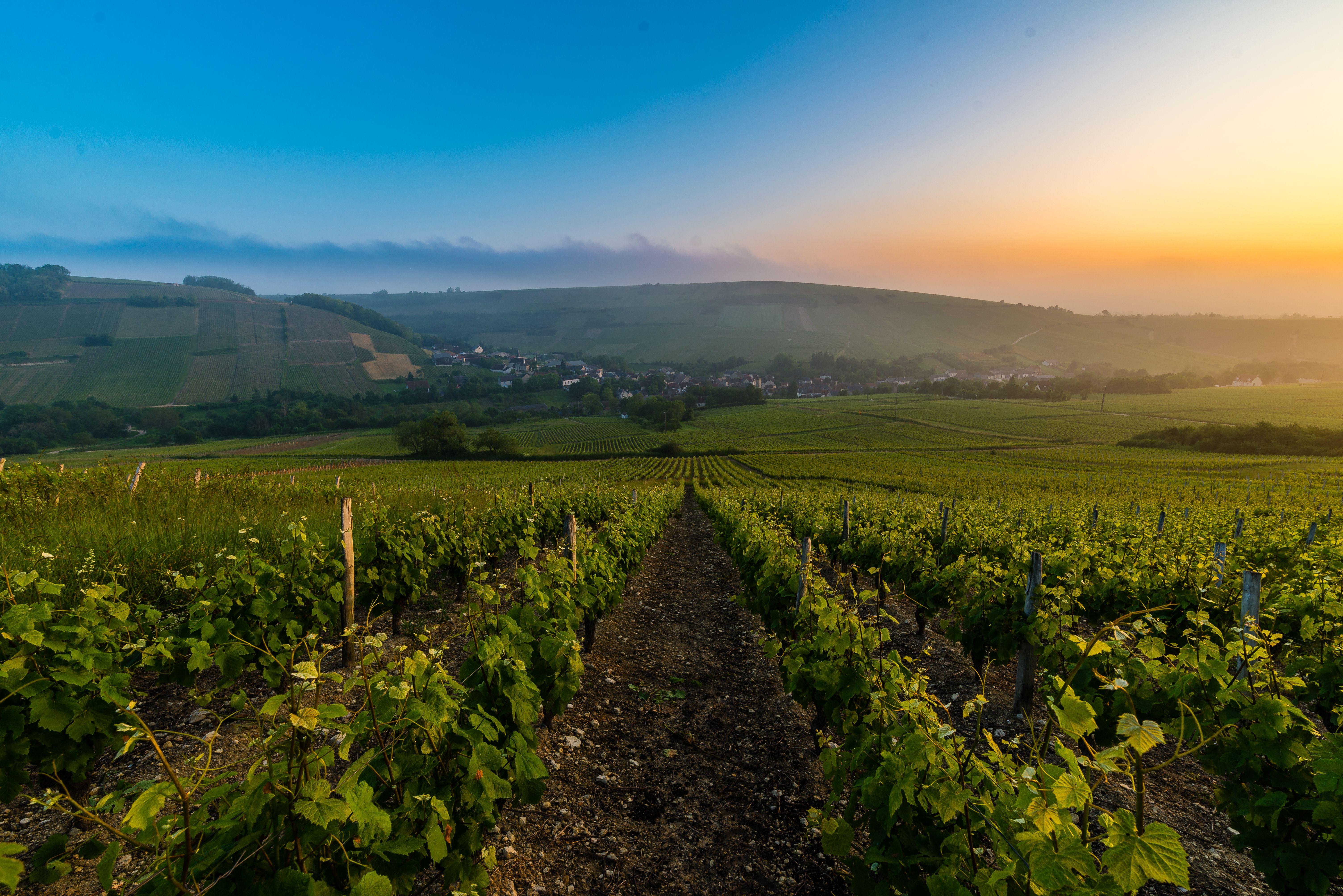 Vignes à Chavignol - Crédit Ad2T