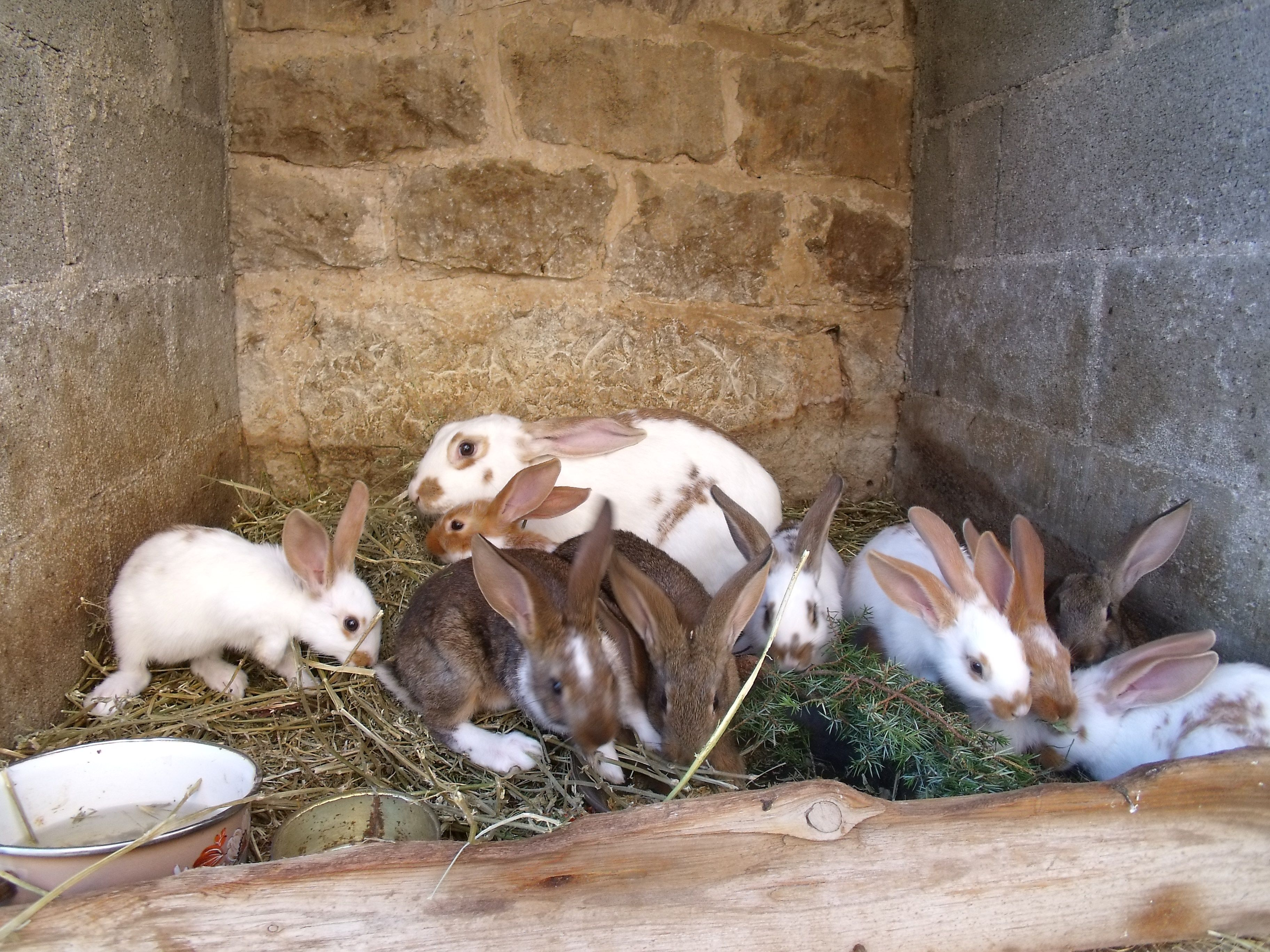 Mes petits lapins aiment les caresses