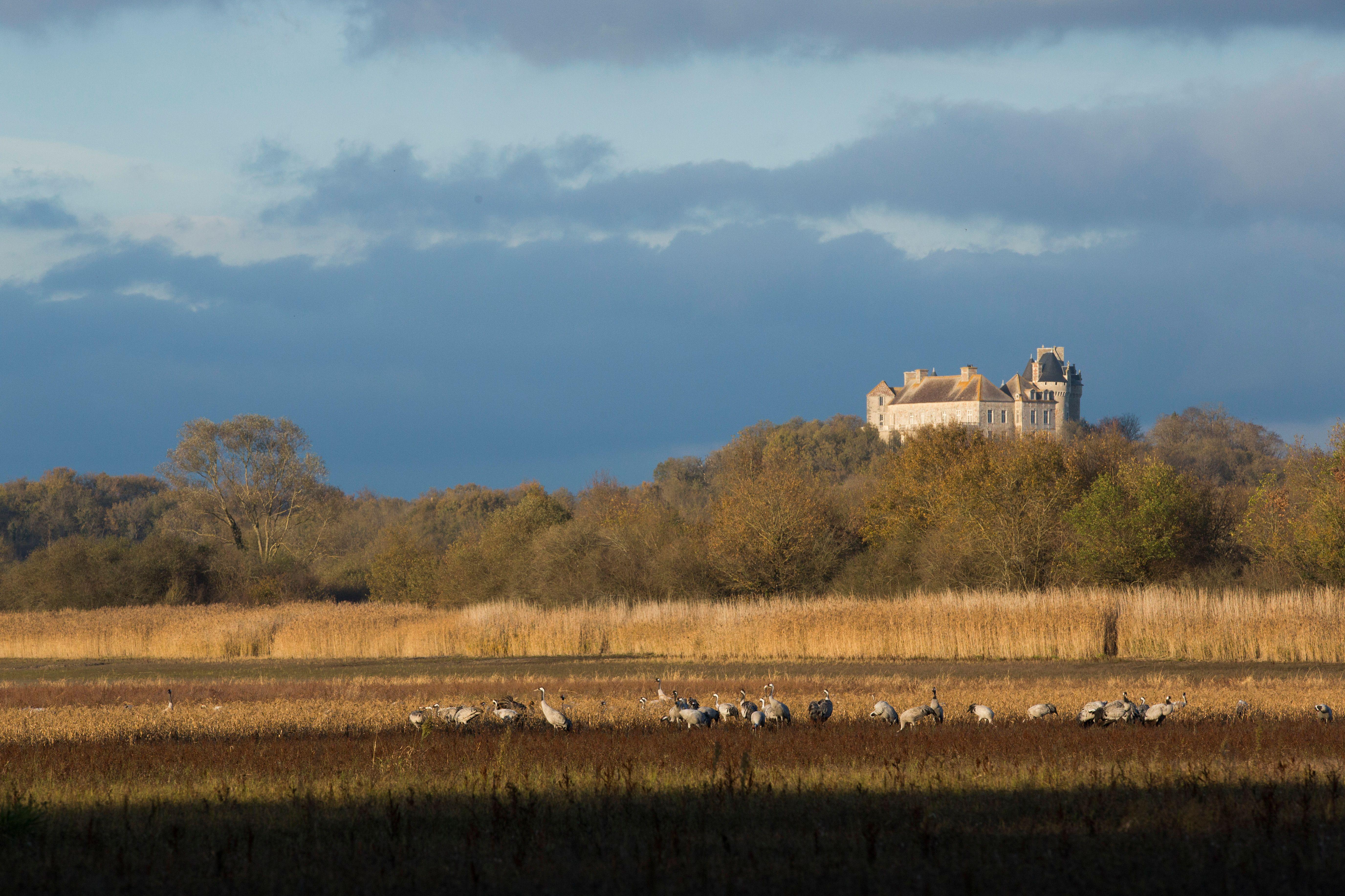 Quelques vues de ce qui vous attend; des grues sous le château du Bouchet à côté de la maison du Parc