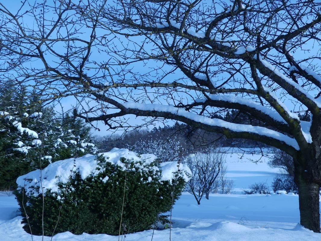 Il a neigé dans l'aube rose,si doucement neigé, que les choses semblent avoir changé.