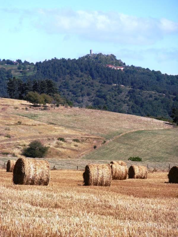 Paysage et patrimoine ancien en toute harmonie ... sur l'horizon la tour féodale de ROCHE EN REGNIER
