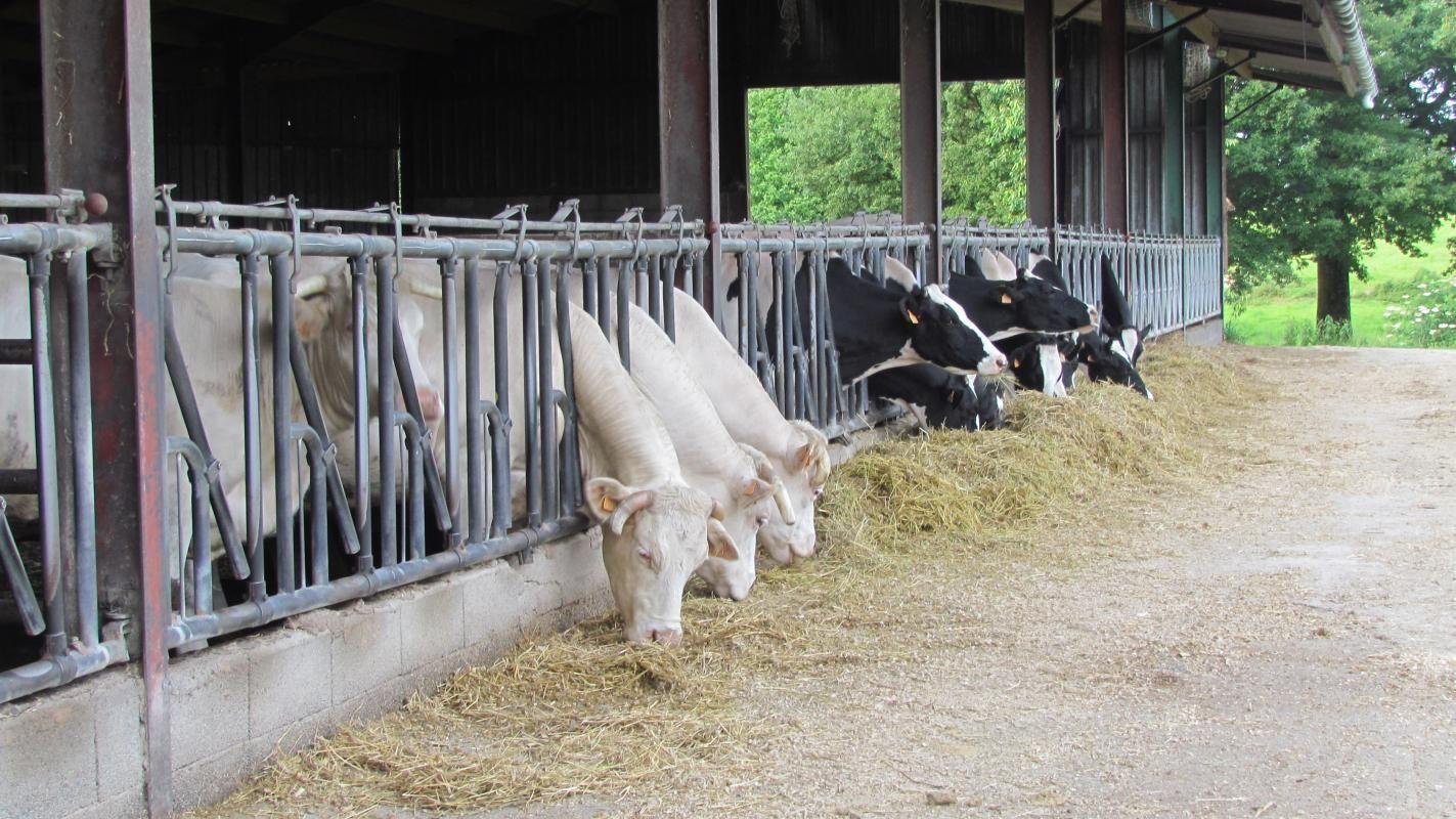 Ferme (production laitières  et allaitantes)