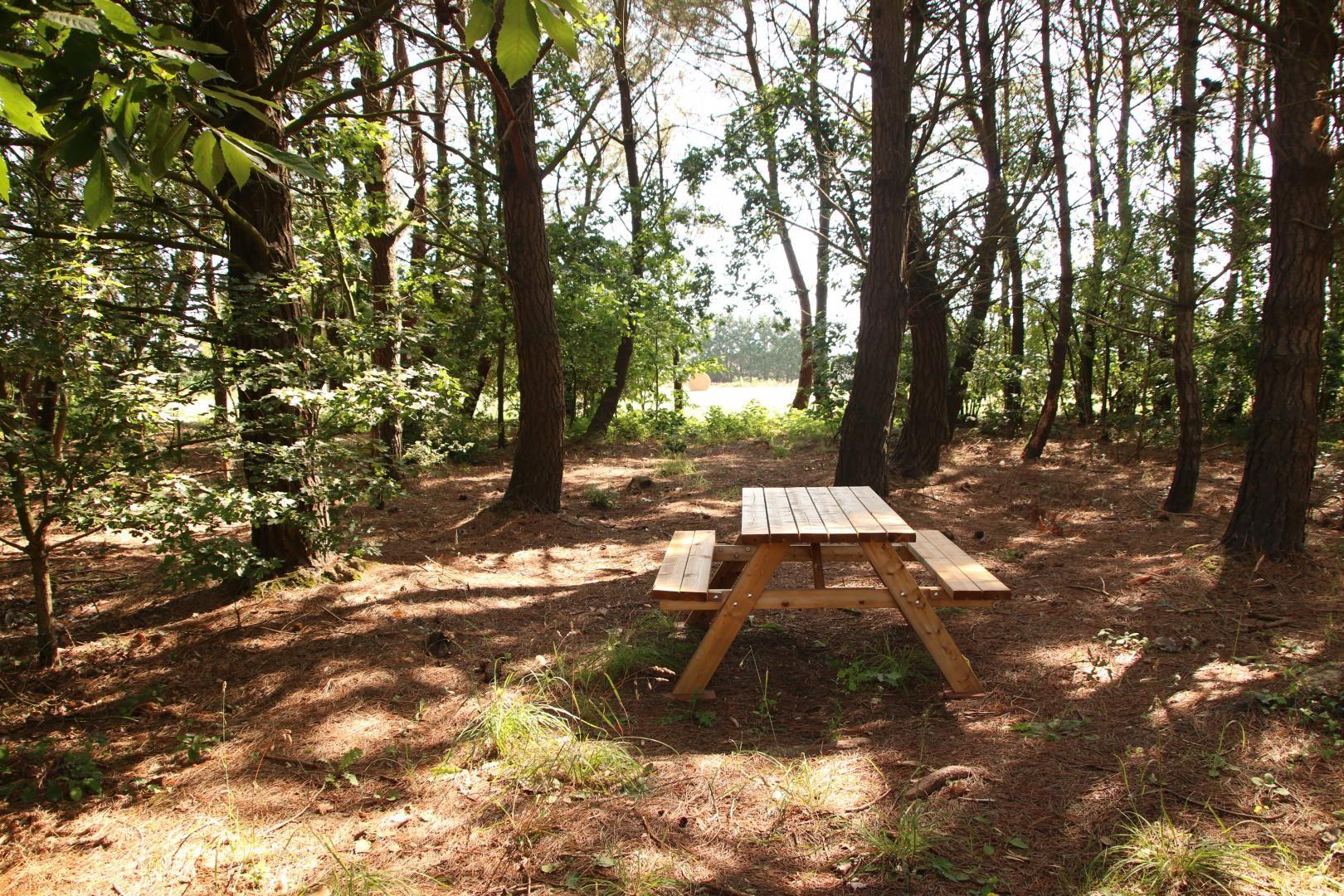 Pinède privée avec table forestière