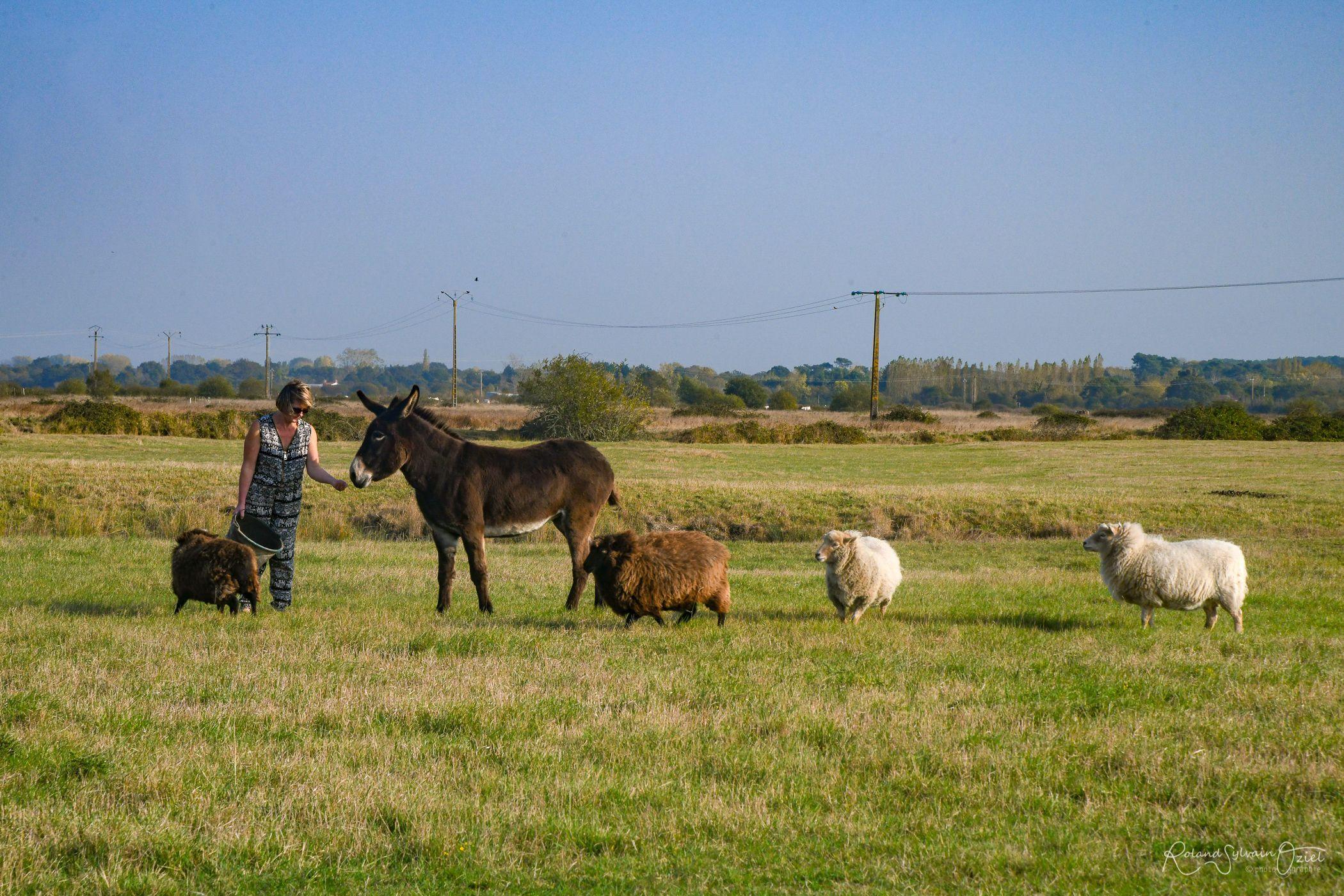 Anisse et nos quatre moutons.