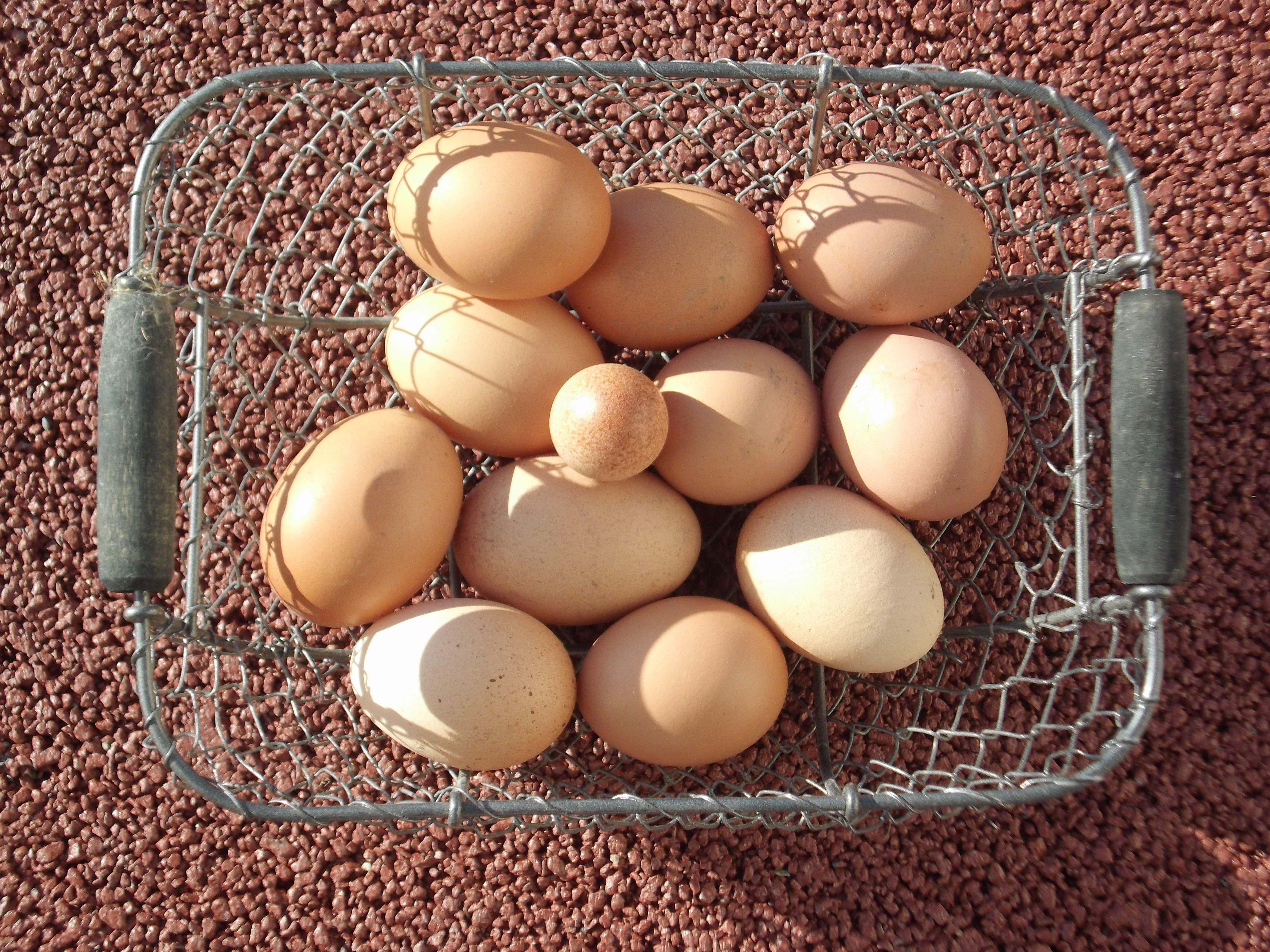 FAROBÉ les œufs frais