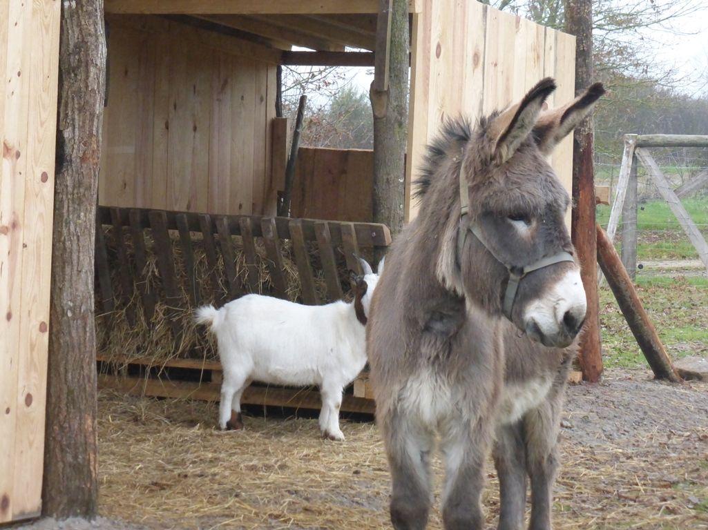 Une mini ferme à l'Oasis de la Borderie -animaux