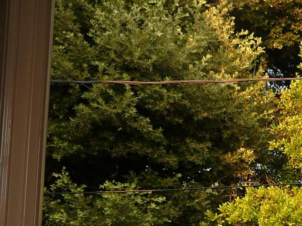vue arrière grands arbres