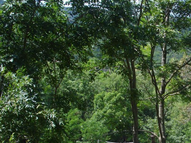 emplacements n° 11 et 12 en bordure de rivière et terrain de volley/badminton