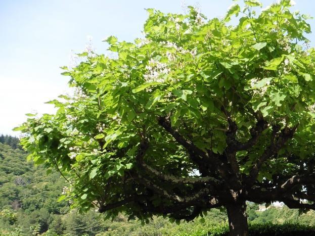coin détente et repas sous l'arbre