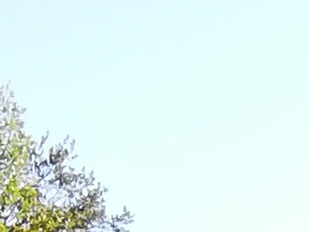 Les jardins suspendus de Labeaume à 10 min en voiture du gîte