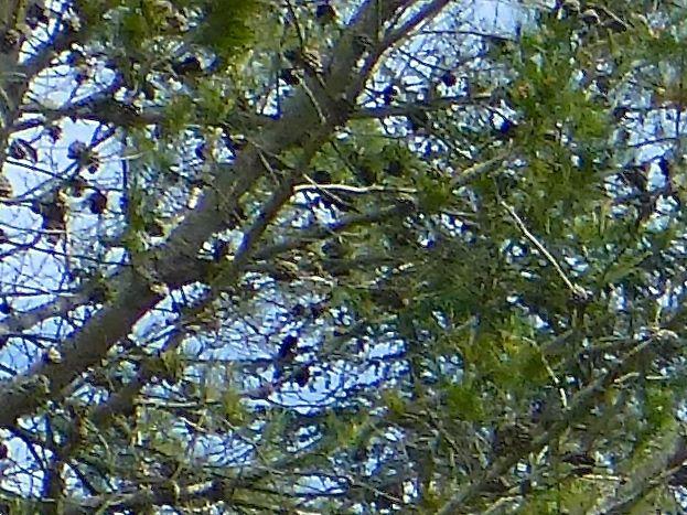l'aile des gîtes