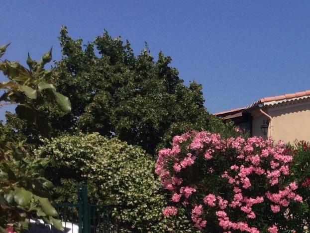 au fond la villa des propriétaire cachée par le jasmin et les lauriers roses