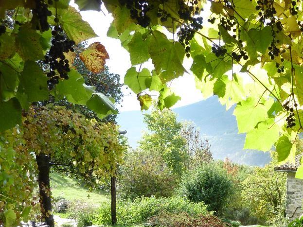 début d' automne...le raisin est mûr!