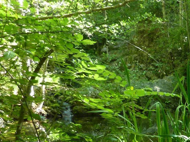 les iris d' eau de la baindola
