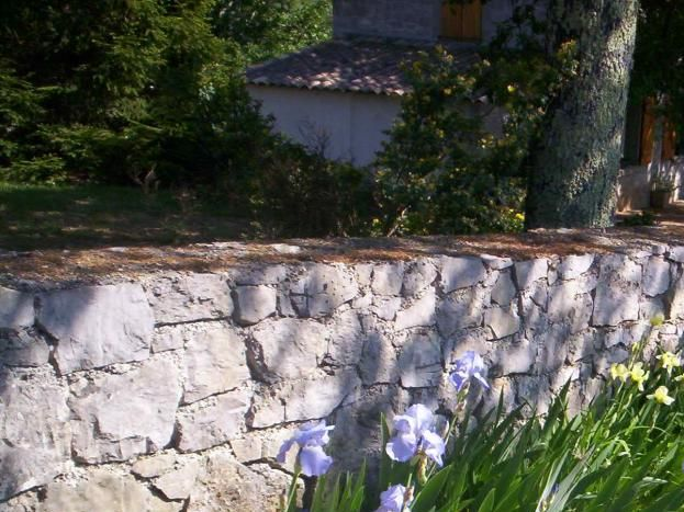 Et les belles iris en fleurs