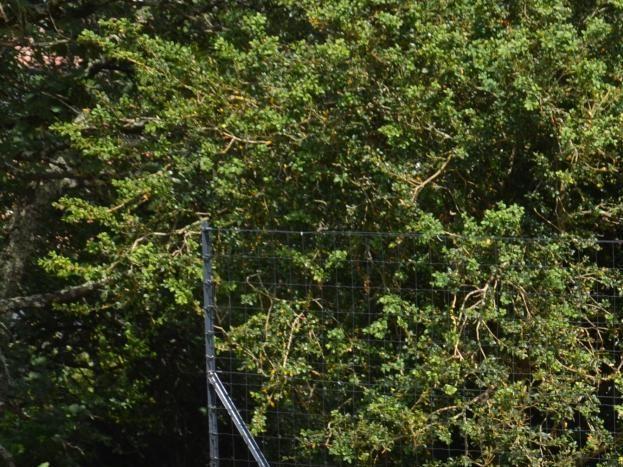Piscine sécurisée avec volet roulant et clôture grillage