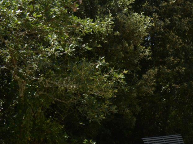 le terrain de pétanque au milieu des chênes et des oliviers