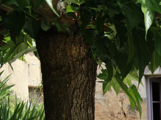 Terrasse ombragée par le murier..plancha et hamac..