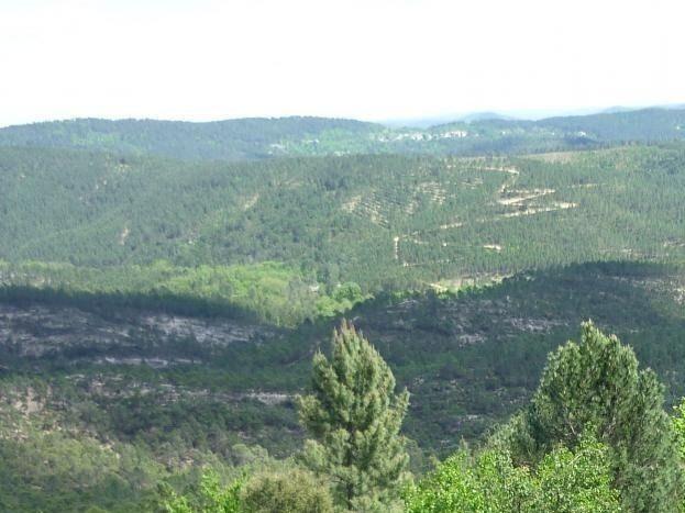 vallée boisée