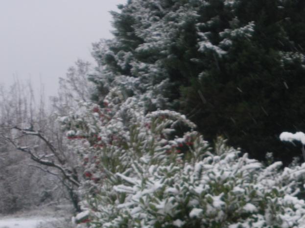 Vacances de Noël, parfois surprise de la neige;;;