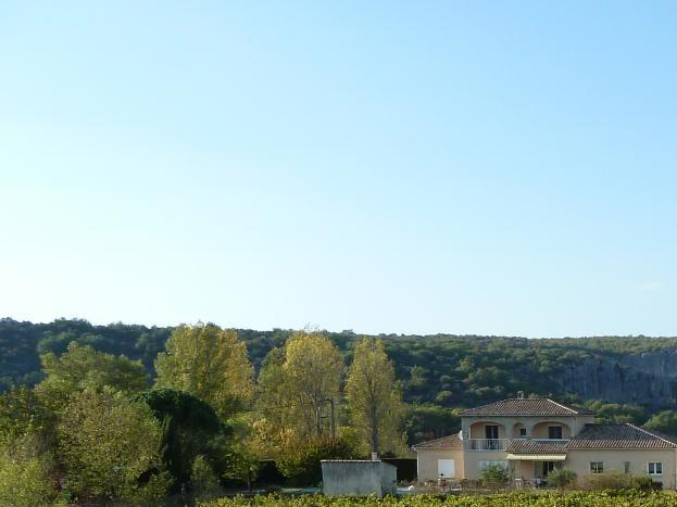 Vue de la terrasse sur les vignes ( viogniers)