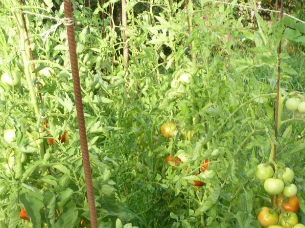 le jardin et ses légumes