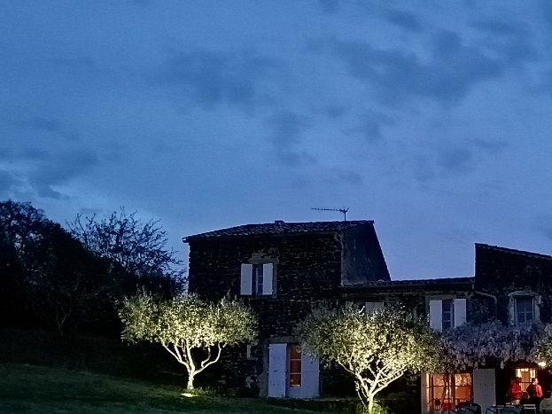 Les oliviers devant la maison.