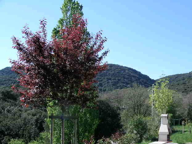 terrasse et jardin avec vue sur les collines