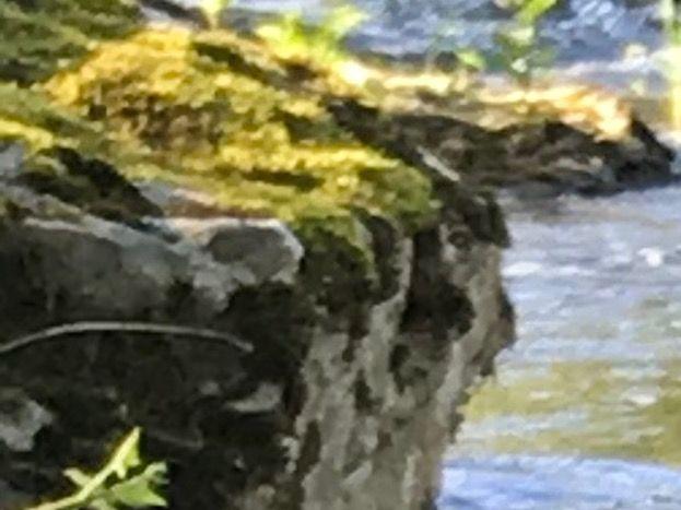 rivière le long de la propriété