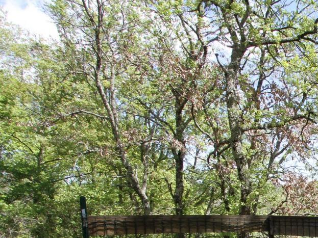 terrasse commune sous bois