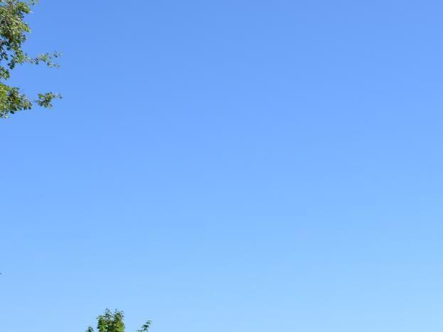 Terrasse face à une oliveraie