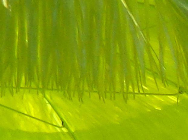 Piscine Plein Sud,  à partager : 10 m x 5 m. Profondeur 1,20 côté Abri (Ouest) et 1,60 m à l'opposé   (côté Est), le fond descend en pente douce.