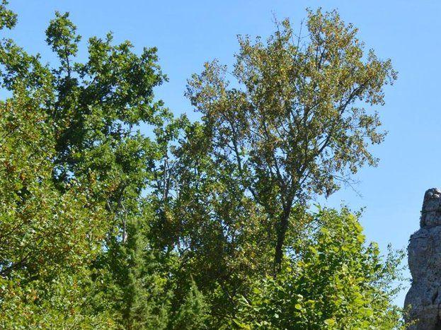 Le Bois de Paîolive et le rocher L'Ours et le Lion