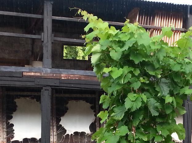 Le patio 2