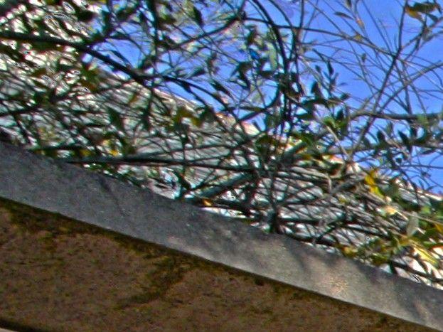 Terrasse privée au sud