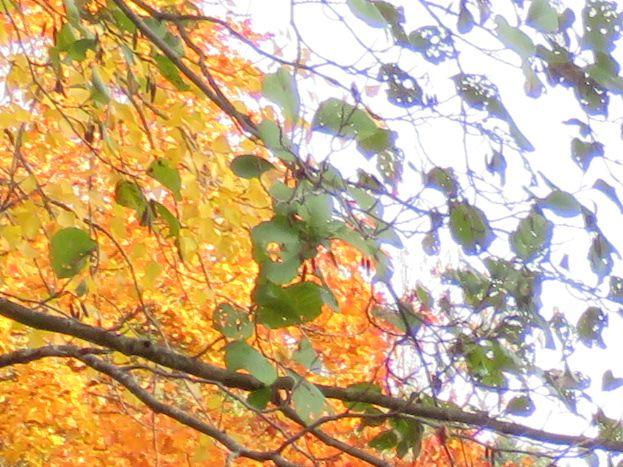 Le Dourdou à Laur en automne
