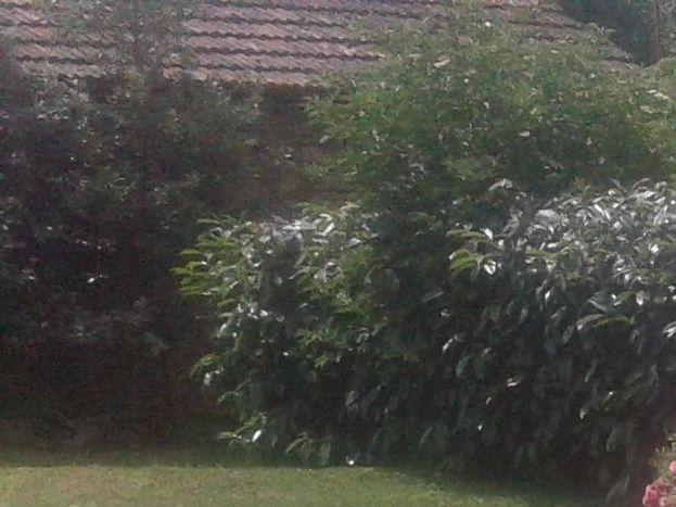 déco jardin...