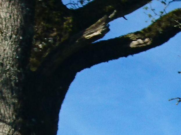 le gîte coté lac branche de chêne