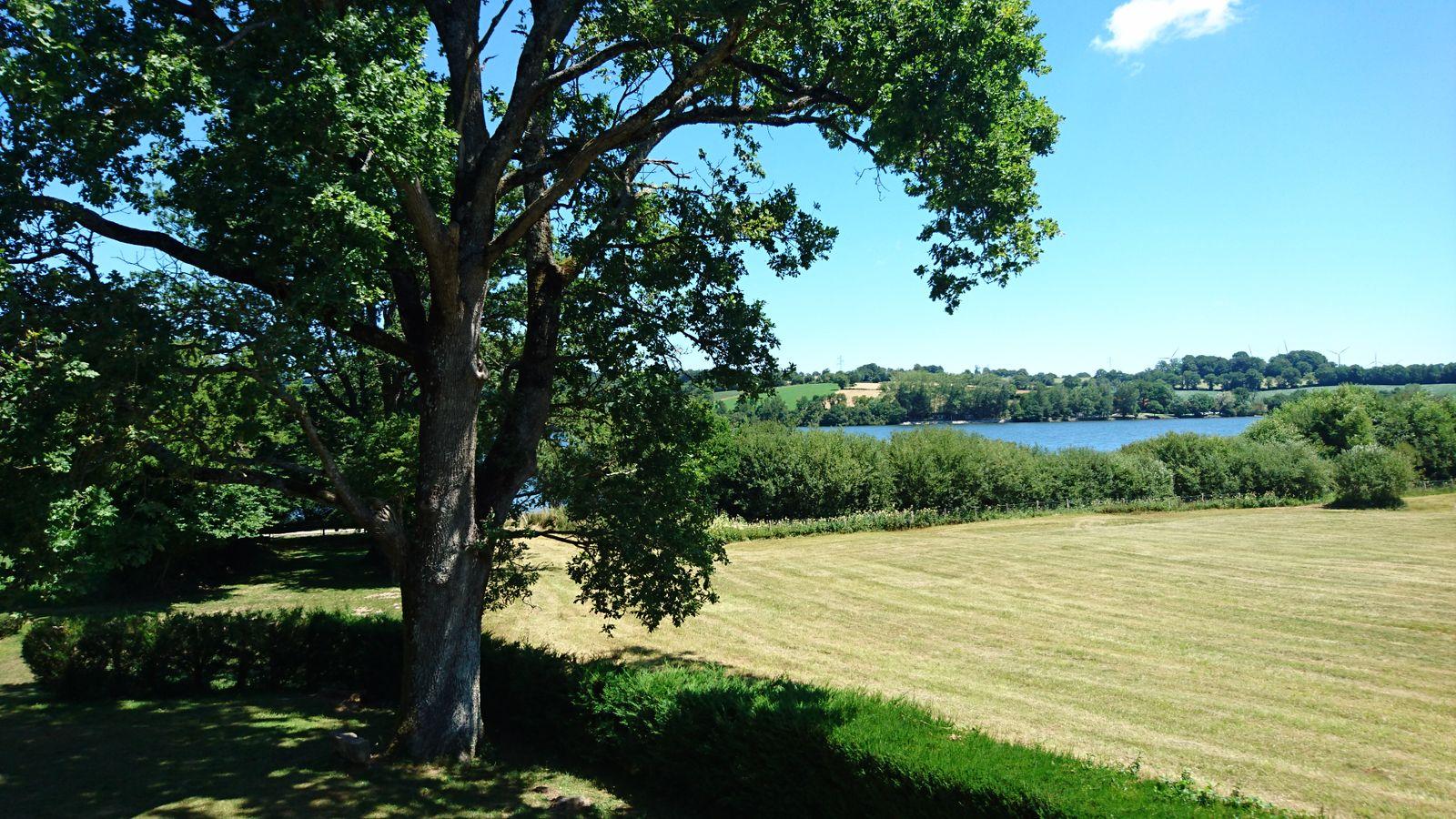 le lac vue du gîte avec son chêne centenaire