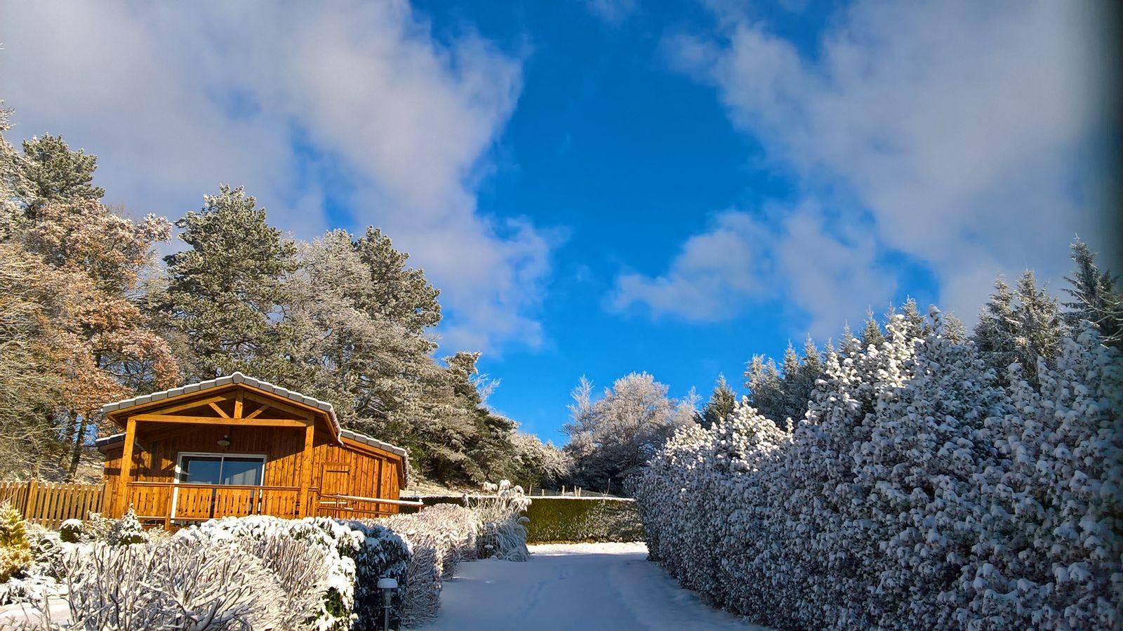 le chêne en hiver