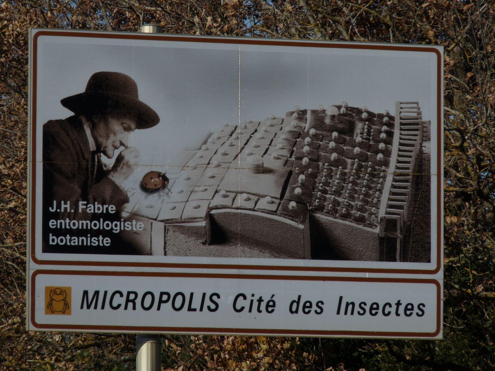Cité des insectes pour enfants et adultes