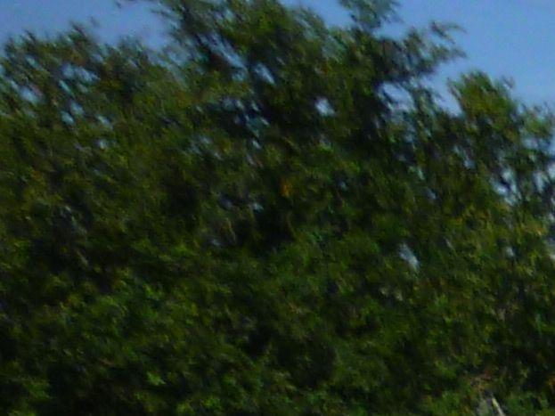 La lavogne de Montredon, abreuvoir pour les brebis