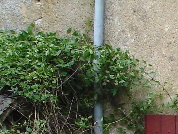 Terrasse sur espace de verdure au calme