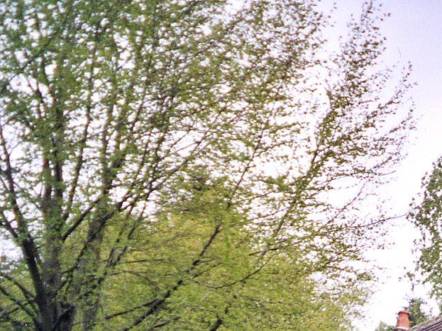 Photo 1/10