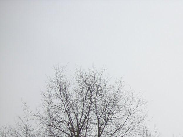 Photo 8/12