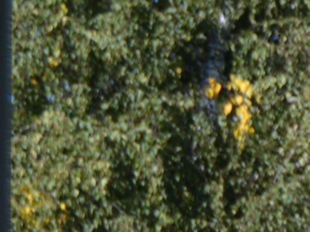 pelouse devant gites coté est