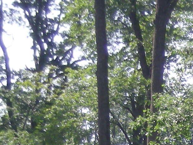 Forêt Domaniale de Châteauroux