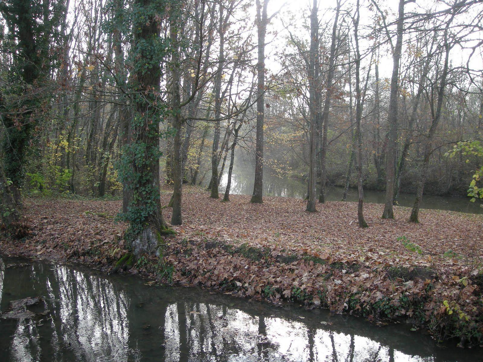 Rivière derrière le gîte  - au fond du jardin