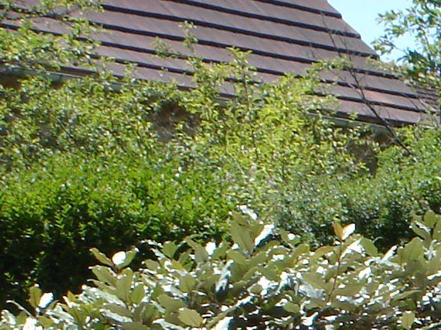 Le Bihoreau terrasse